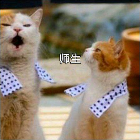 qq头像小孩子超萌男生抱着猫