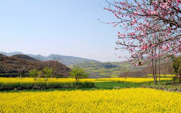 (图片来源于网络) 推荐理由:红山村,第一次知道花都还有这么一个地方,离广州不远,踏青很适合,关键是不要收门票。大片大片金黄的油菜花,游人在田间嬉戏,蜜蜂在花间飞舞,既可沿着小路溯溪徒步而上,也可以踩着自行车享受春风拂面的感觉。如果你乐意,你也可以享受一下自己摘点农家菜的感觉。 阿婆六村 出游指数: 地址:广东省-广州市-从化区,离培正约86.